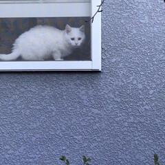 猫と暮らす さむそうだニャ〜