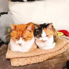 きょうだい猫/猫と暮らす/ペット 並んでます 並んでます
