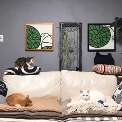 アンティーク調建具/セルフペイント壁/猫と暮らす/インテリア それぞれ寛いでます…私も座らせろーー!