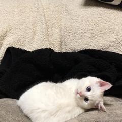 猫と暮らす/冬インテリア 小さい頃のマロたん❤︎*。 手足どうなっ…