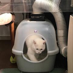 既製品を改造/猫トイレ ニャンコのメイントイレは ダンナが作った…(1枚目)