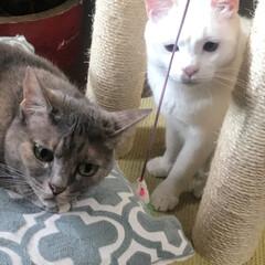 猫と暮らす/ダイエット/フード/おうちごはん/ペット 1枚目は微妙な表情のふたり🤣 3枚目は今…