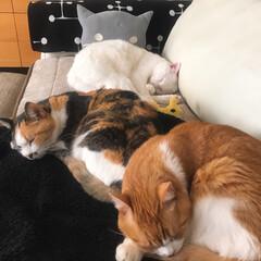 猫と暮らす/ユニクロ/スリコクッション/冬インテリア いつもの場所で みんな寝んね🐱💤