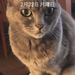猫の日/ねことの暮らし/ねこと暮らす 昨日の猫の日ペコりんだけ時間オーバー😂💔(3枚目)