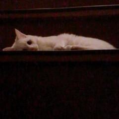ねことの暮らし/ねこと暮らす/階段 マロたん仔猫の頃。先輩ニャンを待ち伏せ🎵…(4枚目)