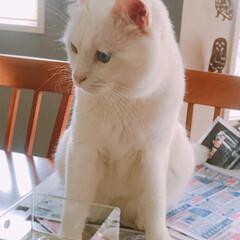 猫と暮らす/ペット かーたん❗️早く片付けなちゃい‼️