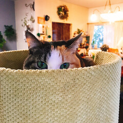 セルフペイント壁/キャットタワー/猫と暮らす/ペット 私パフェ♥12歳だけど仔猫ちゃんみたいに…