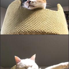 キャットタワー/猫と暮らす/かめロボ 新しいキャットタワー  この場所はみんな…