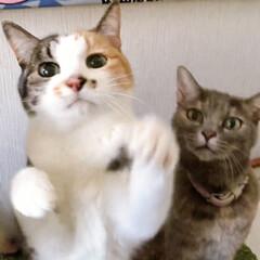 marimekko/ファブリックパネル手作り/ねことの暮らし/ねこと暮らす/猫との暮らし 草欲しいの舞 🎶 チントンシャ~ン