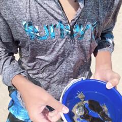 夏の思い出/herley/イカとったぞ〜♪/海 金魚などを移動させる網で潜ってイカとった…