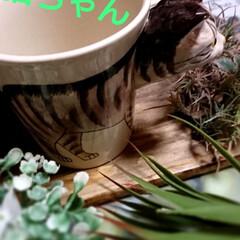 令和元年フォト投稿キャンペーン/令和の一枚 気まぐれ猫ちゃん雑貨シリーズ🐈 本日、4…(3枚目)