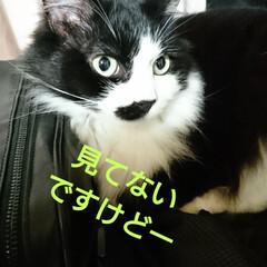 猫さん/暮らし おはようございます🙇 朝から、ニャンズ🐈…(2枚目)