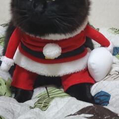 猫ちゃん ふとっちょブラックサンタ❗ くーちゃん!…
