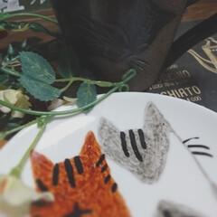 朝/珈琲/フォロー大歓迎/ペット/猫/おうち ビッグダディ😎おばさん🤗 モーニングコー…