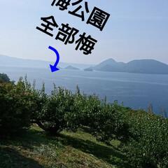おすすめアイテム/令和の一枚/LIMIAおでかけ部/おでかけ/風景/地元のオススメ 北海道道南洞爺湖を紹介しまーす⤴️ 今日…(3枚目)