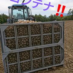 北海道/新ジャガ/わたしのごはん 今年も友farmer🎵 🥔いも収穫無事終…(2枚目)