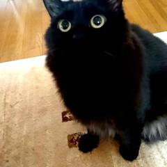 福笑い‼️口ありませんけど/くーちゃん!/黒猫/ペット くーちゃん!口が見えませんけど・・・ 昼…