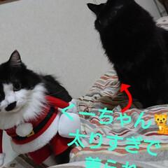 保護にゃん🐱しらす/クリスマス2019/リミアの冬暮らし 保護にゃん🐱キジトラ猫さん🎵 名前つけま…(7枚目)