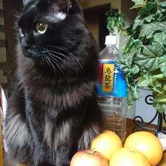 凄いはじっこにイン‼️/くーちゃん!/黒猫/ペット こんばんは🎵今夜のくーちゃん! カウンタ…(2枚目)