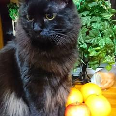 凄いはじっこにイン‼️/くーちゃん!/黒猫/ペット こんばんは🎵今夜のくーちゃん! カウンタ…