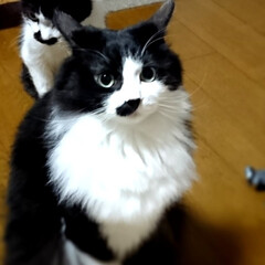 ピーチ🍑🐈/チャッピーばあやん元気/あけおめ/フォロー大歓迎/ペット/猫/... 今年初?ピーチ🍑🐈のショット📸 遠近法で…