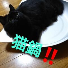 猛暑/猫鍋/にゃんこ同好会/うちの子ベストショット イヤー💦💦💦💦 本当暑い💦💦💦 くーにゃ…