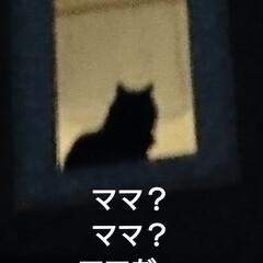 猫/にゃんこ同好会/春の一枚 今夜、少し遅い帰り😅 くーちゃん🐈 いつ…(4枚目)