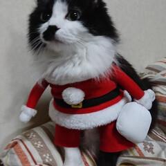 保護にゃん🐱しらす/クリスマス2019/リミアの冬暮らし 保護にゃん🐱キジトラ猫さん🎵 名前つけま…(6枚目)