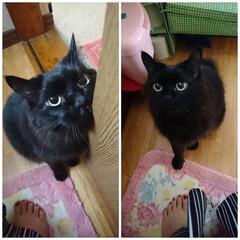 ママ!トイレまで・・・・/黒猫/ペット くーちゃん!✋やめて〜❕ トイレまで・・・