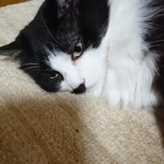 猫ちゃん 寝ちゃいました‼️ピーチ‼️