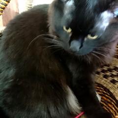 黒猫/ラブリコ/キャットウォークDIY🛠️/暮らし/DIY/わたしの作業部屋 おはようございます🤗 只今、室温24.5…(5枚目)
