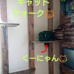 黒猫/ラブリコ/キャットウォークDIY🛠️/暮らし/DIY/わたしの作業部屋 おはようございます🤗 只今、室温24.5…