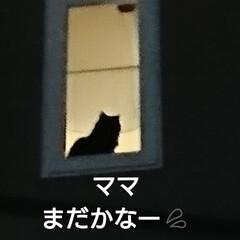 猫/にゃんこ同好会/春の一枚 今夜、少し遅い帰り😅 くーちゃん🐈 いつ…(2枚目)