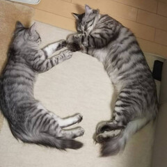 暖か丸/保護猫🐈/フォロー大歓迎/ペット/ペット仲間募集/猫/... おはようございます🗻🏂⛄ 今日はお友達の…