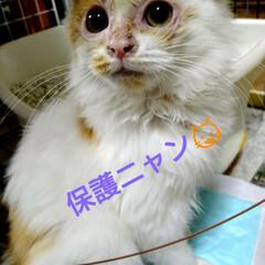 元気いっぱい/北海道/里親さん募集中/猫風邪/保護猫 おはようございます😸 保護ニャン😸 その…