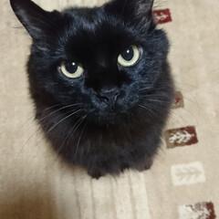 エックス/黒猫/ペット くーちゃん!綺麗なエックスだったのに・・…
