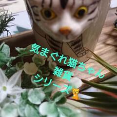 令和元年フォト投稿キャンペーン/令和の一枚 気まぐれ猫ちゃん雑貨シリーズ🐈 本日、4…(1枚目)
