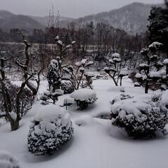 北海道/2018/冬 おはようございます🗻🏂⛄ 起きたら北海道…