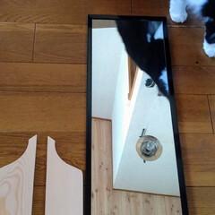 アンティーク調/カッティングボードDIY/猫さん大好き/お家時間/カフェ風インテリア/北海道/... 以前アップした、ダイソー長方形鏡300円…(7枚目)