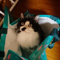 地震/北海道 避難用に用意した、袋にピーチ🐈イン‼️