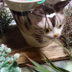 令和元年フォト投稿キャンペーン/令和の一枚 気まぐれ猫ちゃん雑貨シリーズ🐈 本日、4…(2枚目)
