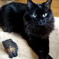 猫雑貨/3D/黒猫/ペット/猫/インテリア/... 札幌の雑貨店で見つけた、3Dプリンターで…