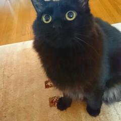 早く帰って来てね/ママ今日もお仕事?/黒猫/ペット おはようございます‼️ 相変わらず、朝か…