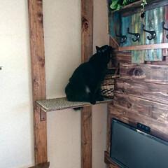 黒猫/ラブリコ/キャットウォークDIY🛠️/暮らし/DIY/わたしの作業部屋 おはようございます🤗 只今、室温24.5…(3枚目)