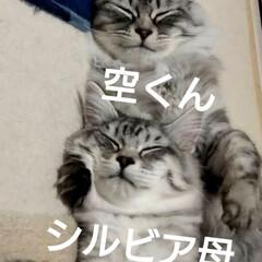 友ニャン🐈/LIMIAペット同好会/ペット/猫/にゃんこ同好会/おやすみショット おはようございます🤗 起きたら、またまた…