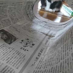 猫トンネル短いバージョン/ペット/ハンドメイド/猫/にゃんこ同好会/うちの子自慢 猫トンネル🐈🎵短いバージョン作りましたが…(7枚目)
