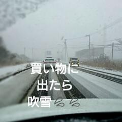 吹雪/LIMIAおでかけ部/おでかけ/春の一枚 まじ、吹雪💦💦 ホワイトアウト状態😱 皆…