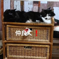 ペット仲間募集/猫/にゃんこ同好会/おやすみショット 今夜はここでおねむ😪💤💤