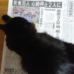 新聞/大地震/北海道 くーちゃん!どけて・・・