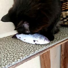 黒猫/ラブリコ/キャットウォークDIY🛠️/暮らし/DIY/わたしの作業部屋 おはようございます🤗 只今、室温24.5…(6枚目)